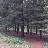 Condon Park Trails