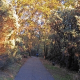Litton Trail