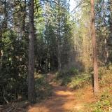 Memorial Park Trail