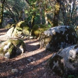 Oaks and moss covered boulders on the trail