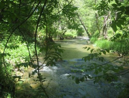 Wolf Creek at North Star