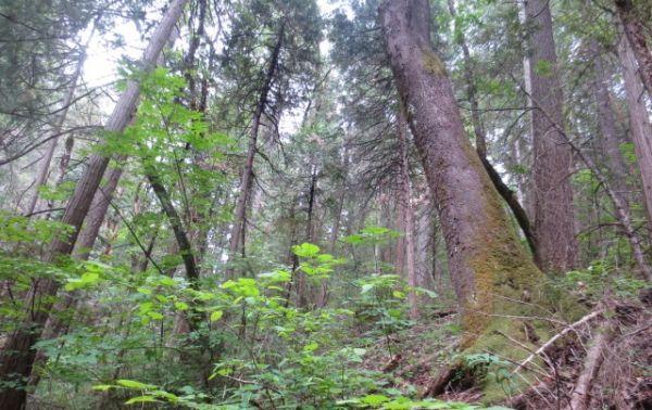 little deer preserve