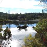 Black Swan Pond