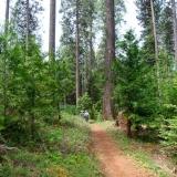 Orene Wetherall Trail