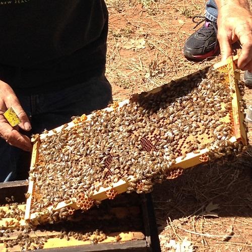 Randy's Bees sm