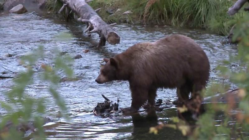 bear still 4