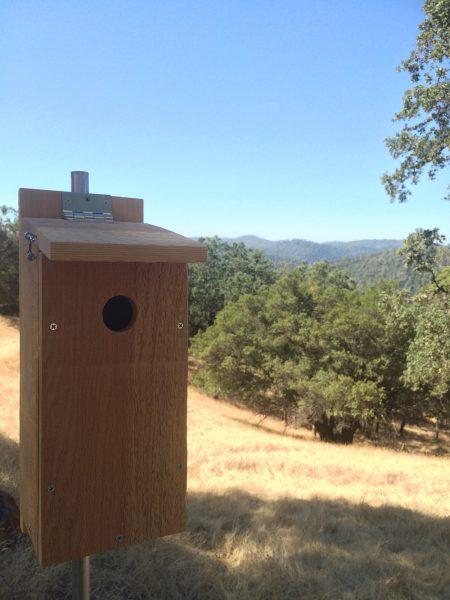 bluebirdbox2